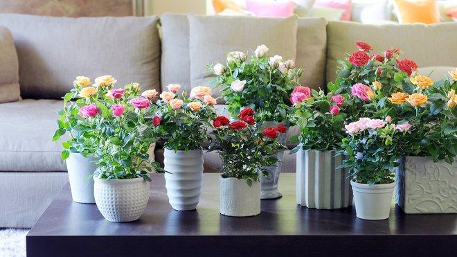 Букет із троянд в інтер'єрі для гарного настрою