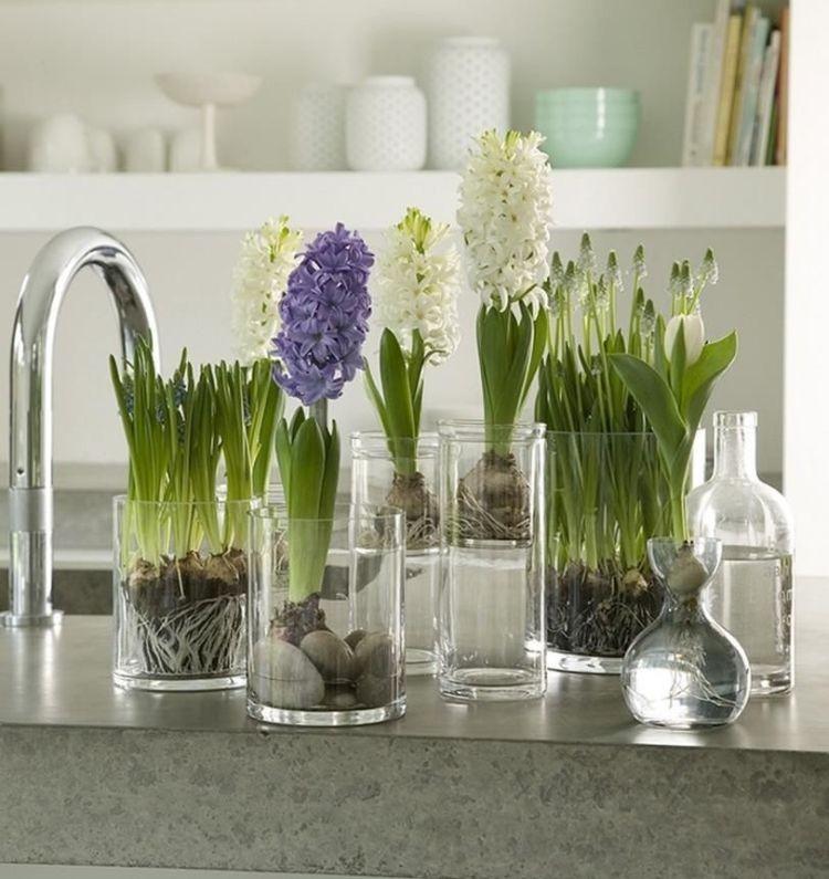 Домашня вигонка цибулинних весняних квітів: гіацинтів, мускарі, тюльпанів
