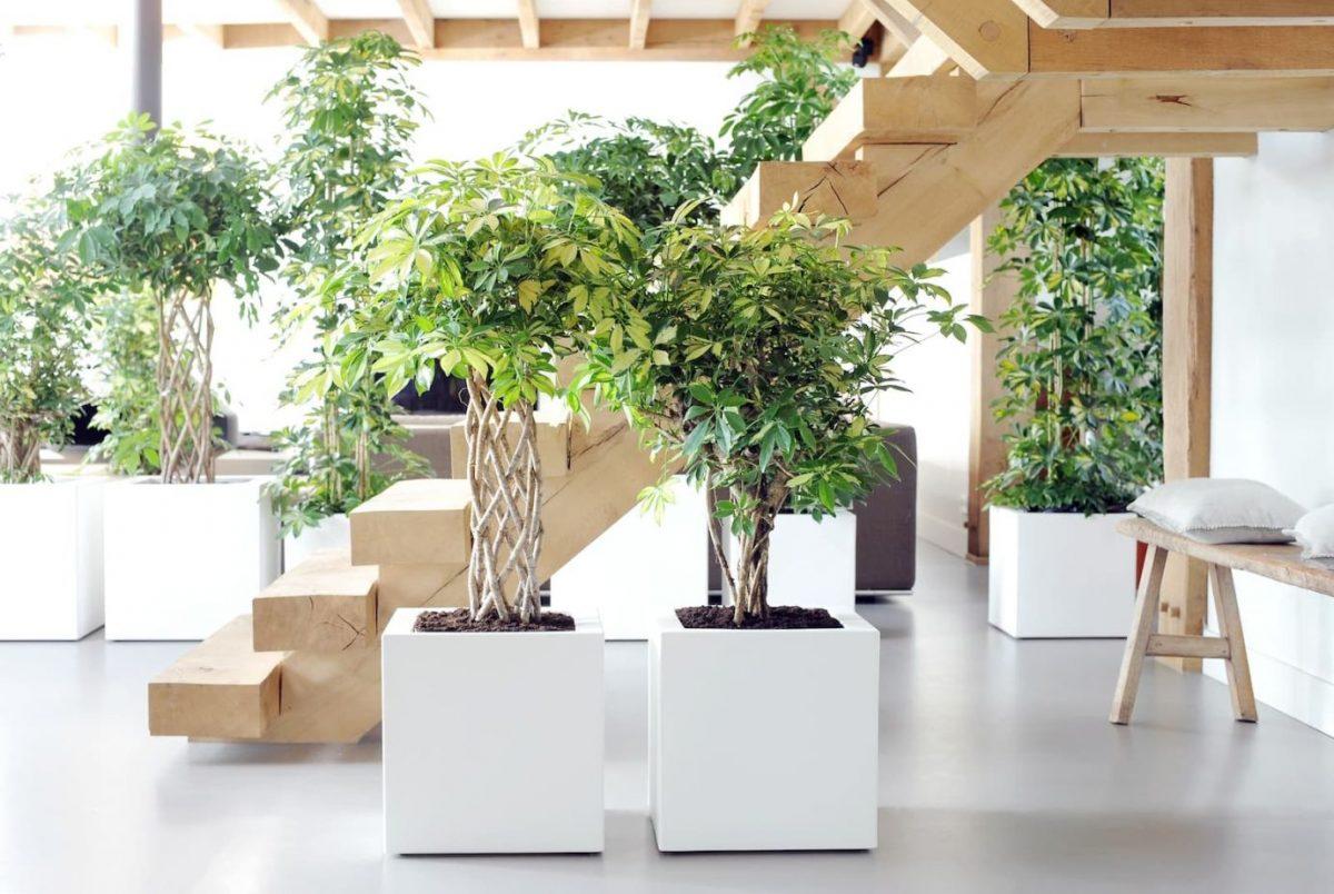 Рослини в інтер'єрі: 5 актуальних трендів