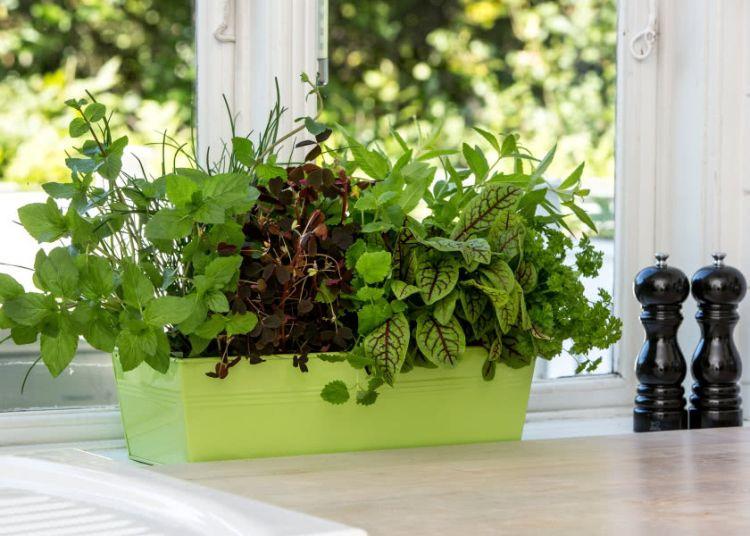 Домашній город з пряної зелені в інтер'єрі кухні