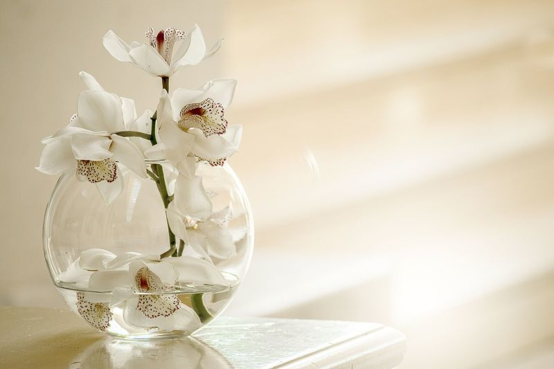 Ніжні орхідеї відрізняються високою стійкістю й довго квітнуть навіть зрізані