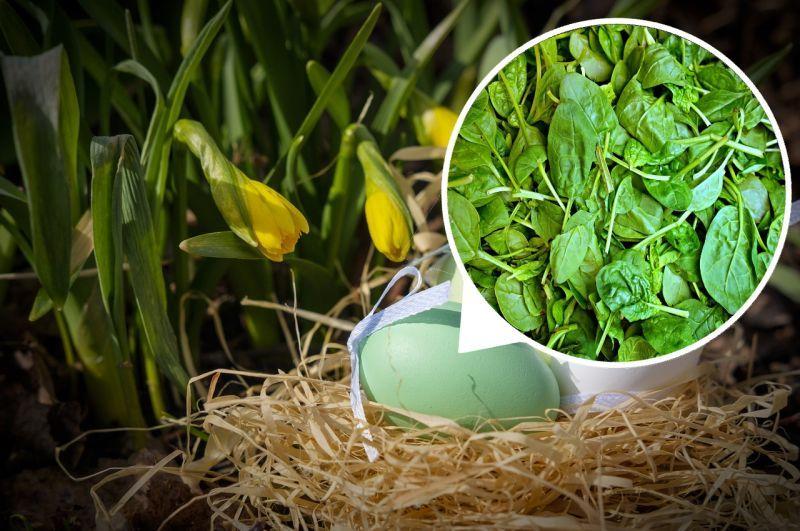 Зелені крашанки: фарбуємо шпинатом або кропивою