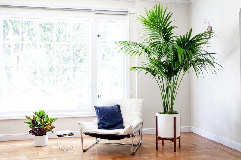 Літні тренди 2021: виразні кімнатні рослини в інтер'єрі