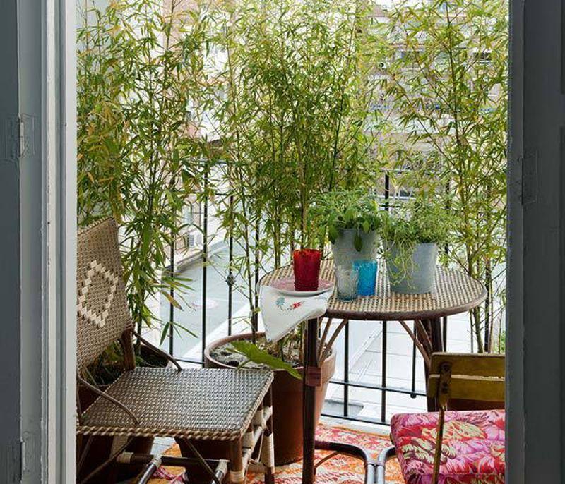 Облаштування балкона декоративними рослинами